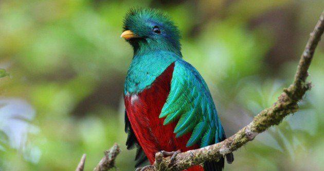 Ubuntu-12-10-a-k-a-Quantal-Quetzal