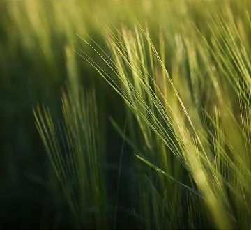 Grass_by_Jeremy_Hill