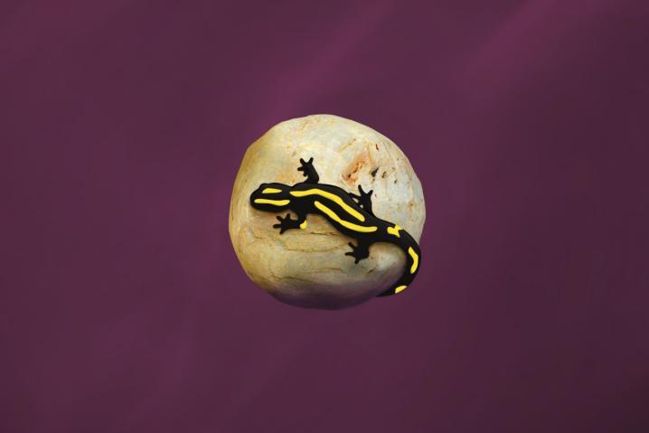I_am_a_Saucy_Salamander..._by_Juan_Pablo_Lauriente