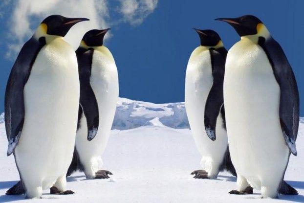penguinsvspenguins