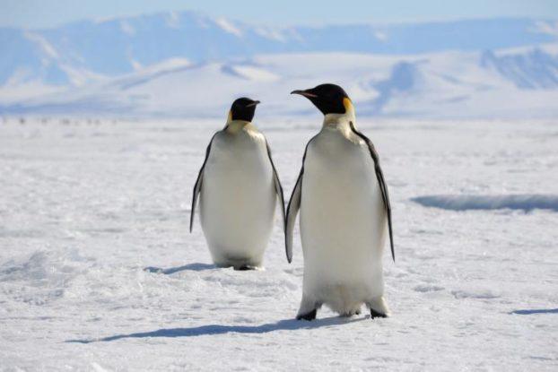 Discusiones en Linux