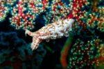 Cosmic Cuttlefish