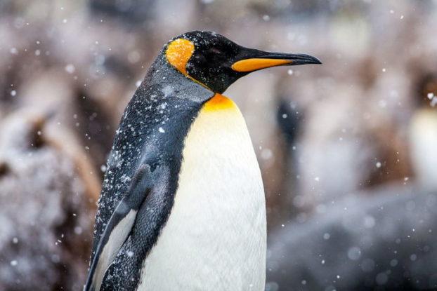 Tux Linux