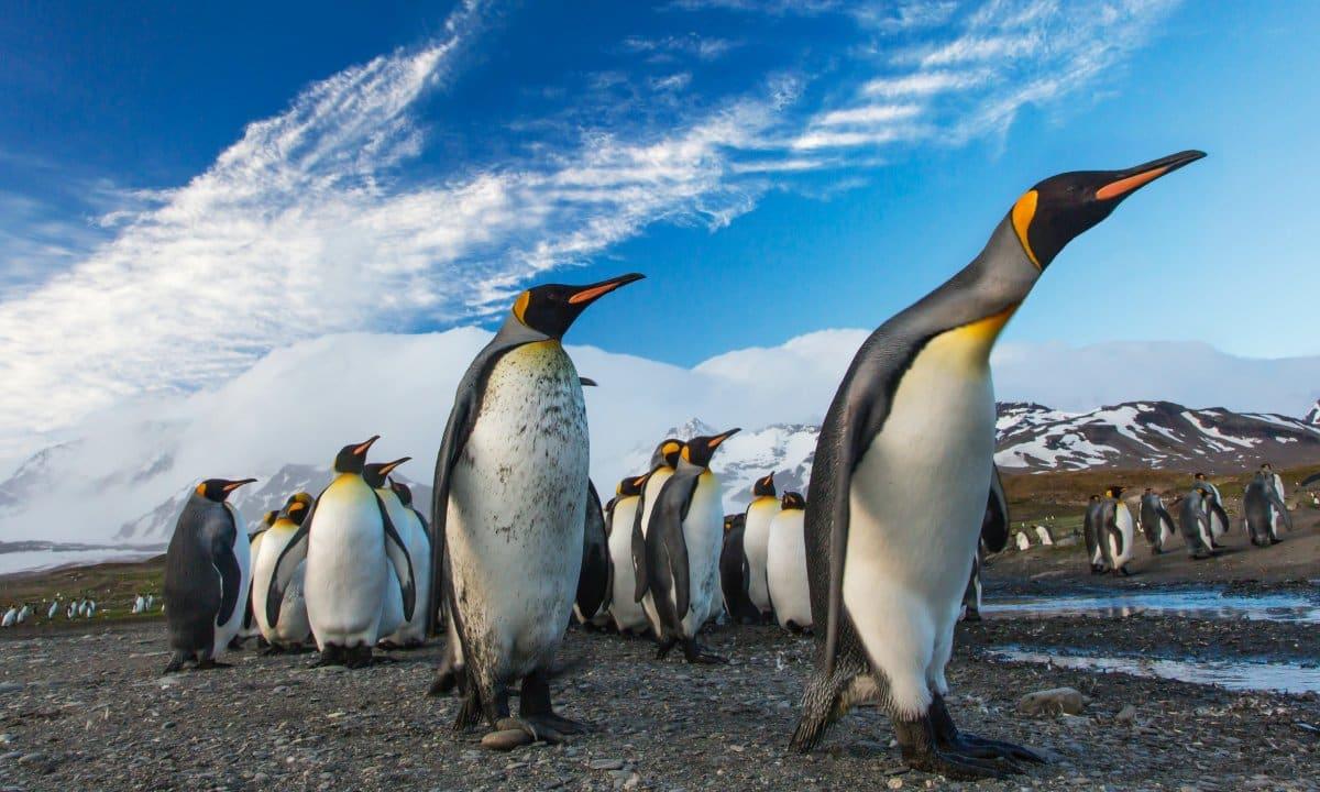 linux cuota de mercado